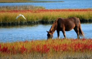 Use Video to Lead Your Horses to Water