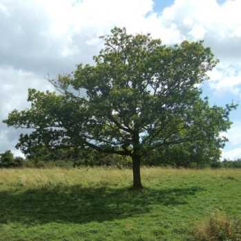 Training Tree Square